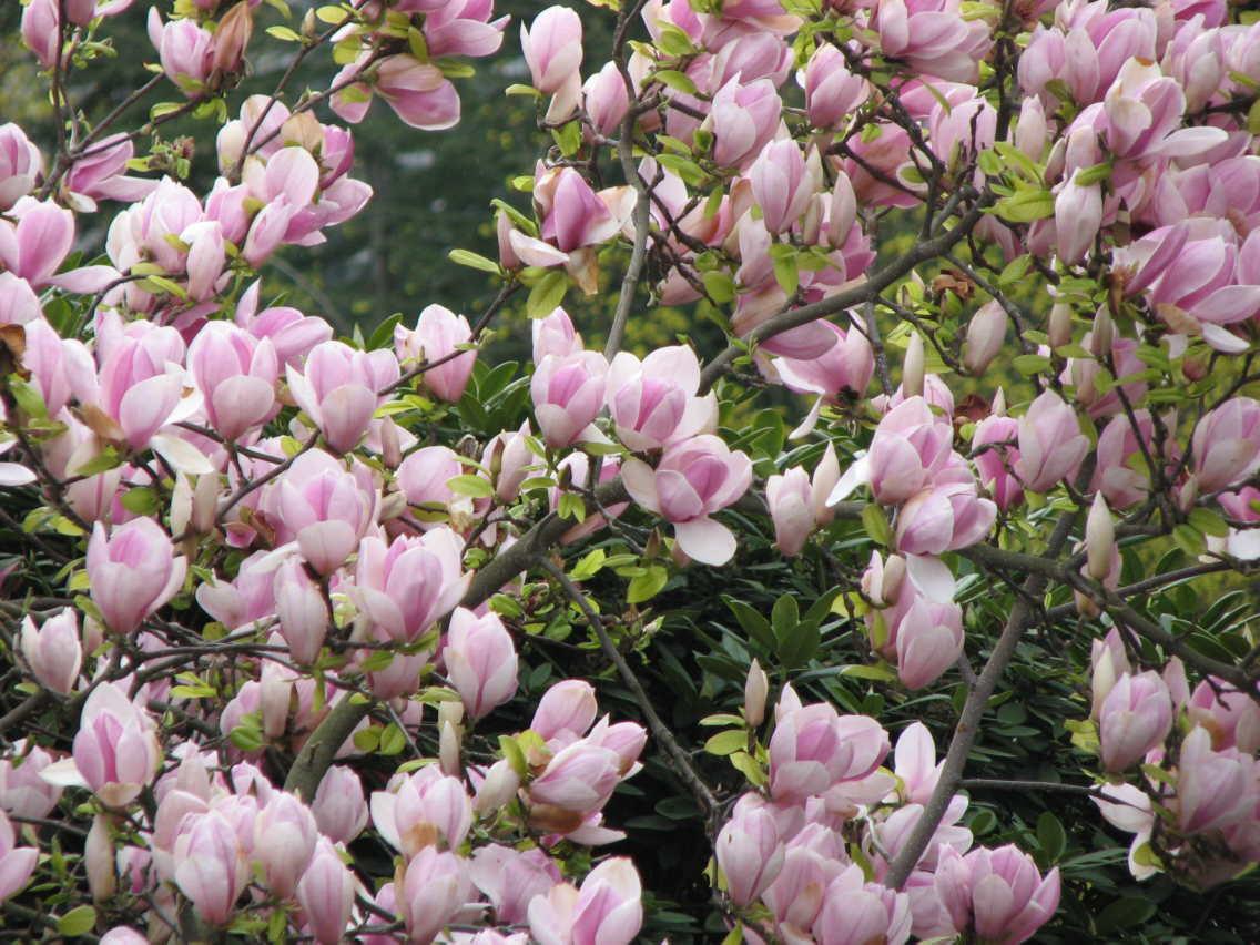 Not Miami Blossoms