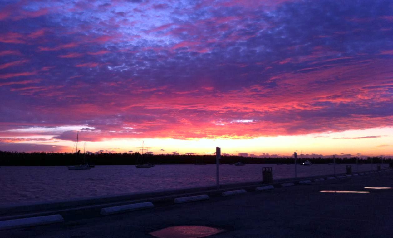 Miami Dawn