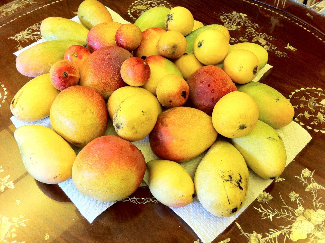 Mangos, Again
