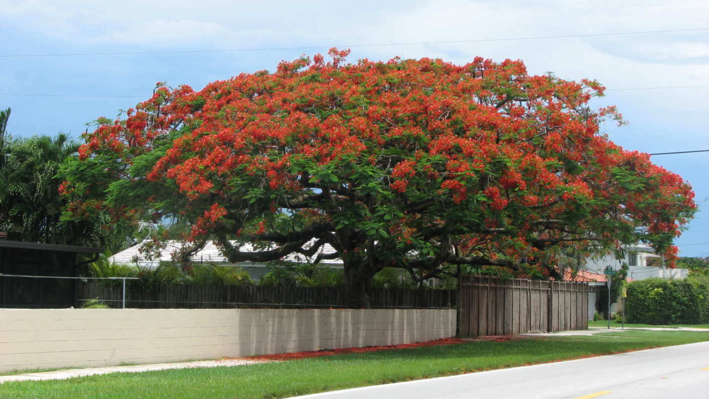 Best Red Tree