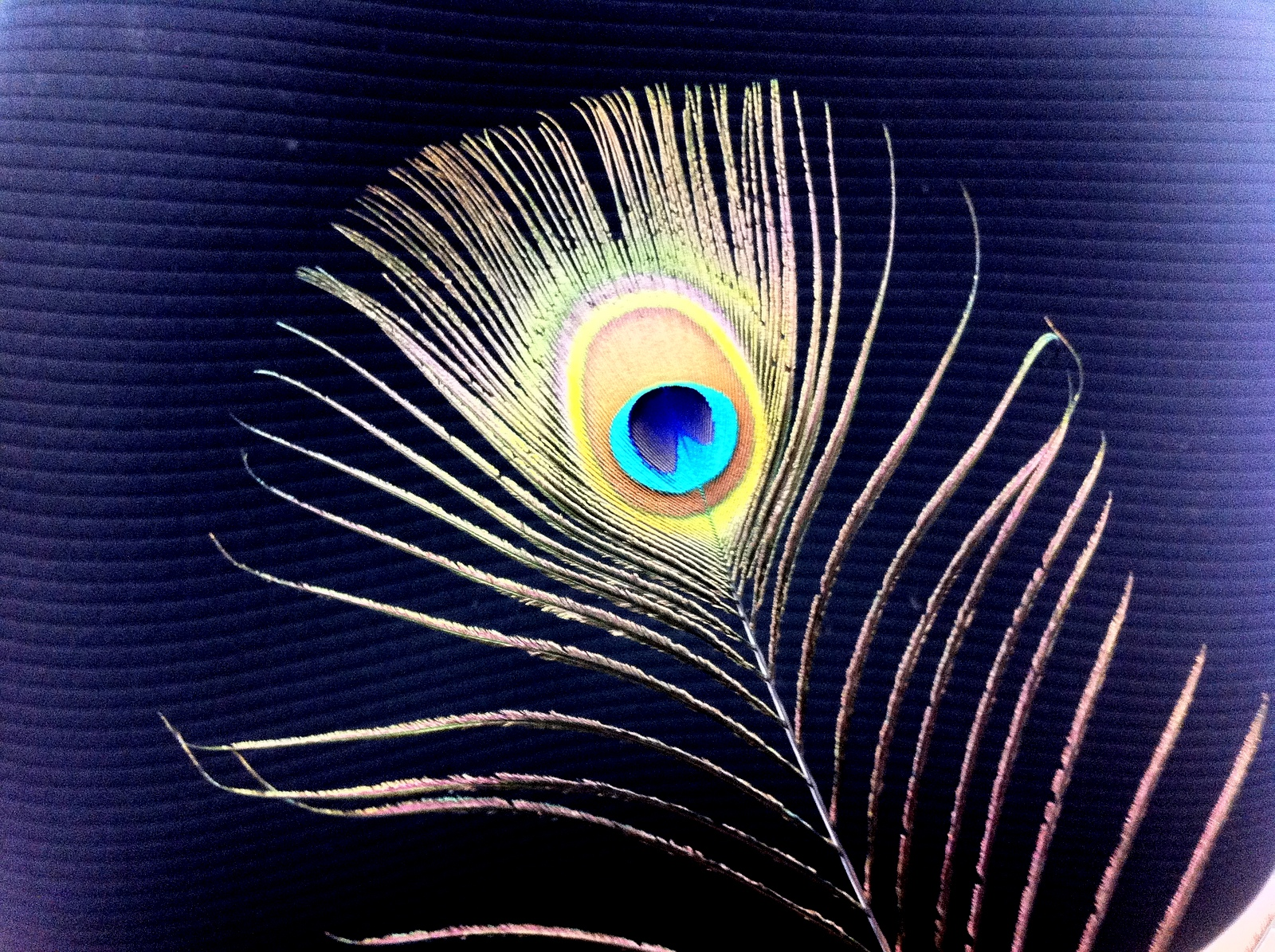 Peacock's Eye