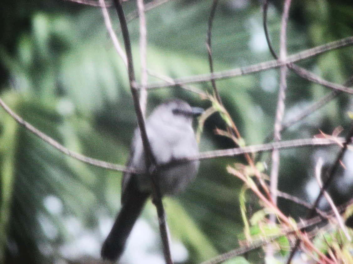 Gray Bird, My Friend