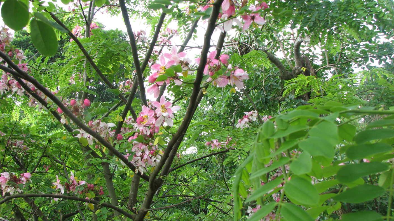 Miami Every Day Miami Flowering Tree