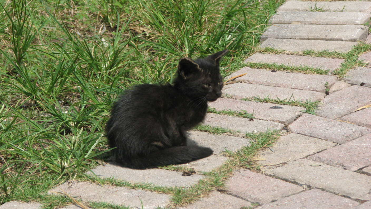 Miami Every Day Photo: Lonesome Kitten