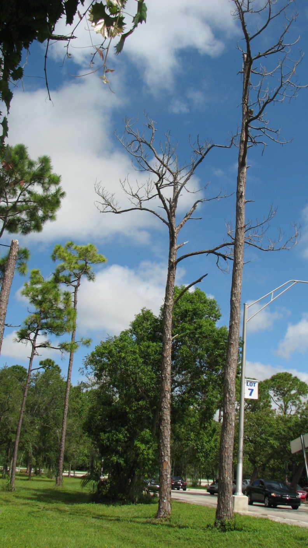 Tree Gone